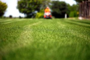 Landscaping Labor